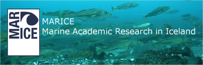 MARICE: Marine Academic Research in Iceland
